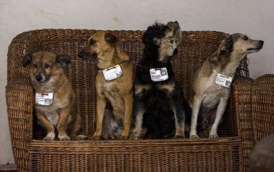 Los perros guardan una conducta impecable en las oficinas públicas y hasta sirven de guardia. (Foto Prensa Libre:AP)