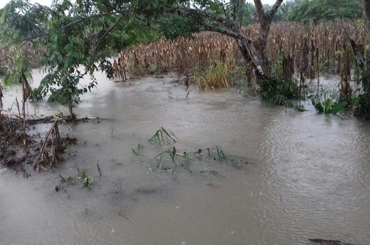Varios terrenos con sembradíos de maíz fueron dañados por las inundaciones. (Foto Prensa Libre: Héctor Cordero)