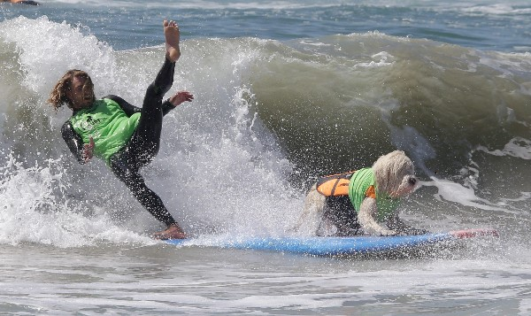 Un etrenador cae al acompañar a un perro surf en Huntington Beach, California.(AFP).
