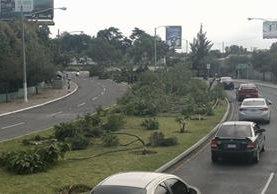 Al menos 48 árboles fueron talados esta madrugada en el bulevar Juan Pablo II, zona 13. (Foto Prensa Libre: Estuardo Paredes)
