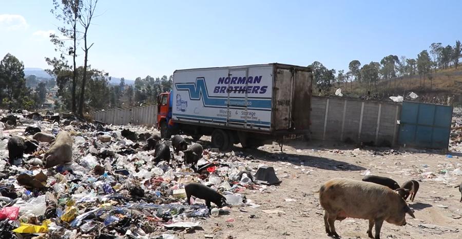 Los animales empeoran la situación, pues riegan la basura que llega hasta en el Cementerio General. (Foto Prensa Libre: Hugo Oliva)
