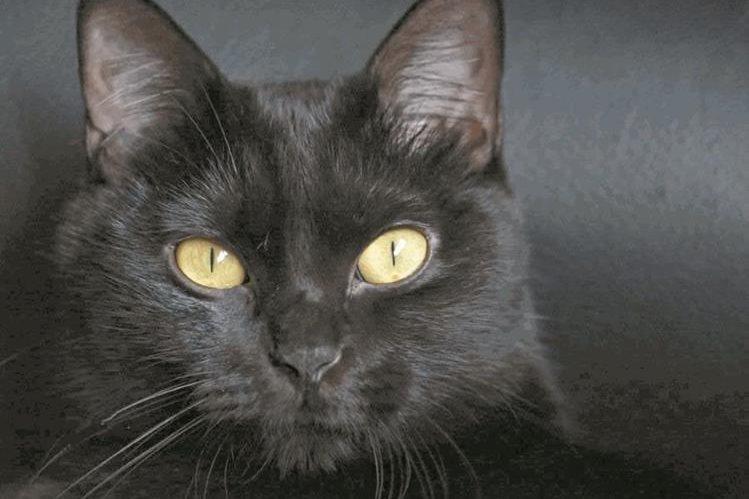 Una gata negra causó que vecinos de Santa Cruz de Mompox, Bolívar, Colombia, comenzaran a divulgar el mito. (Foto de referencia: HemerotecaPL)