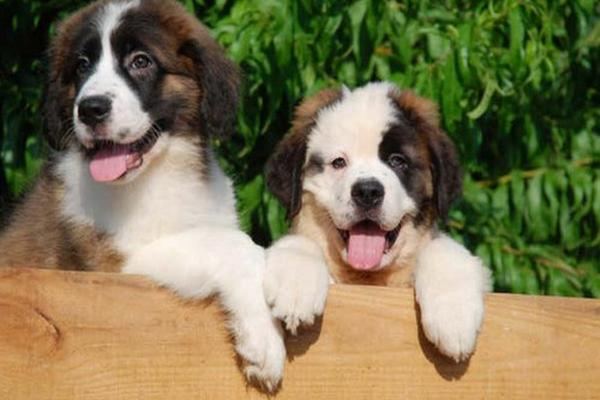 Es bueno querer tanto a la mascota - Es malo banar mucho a los perros ...