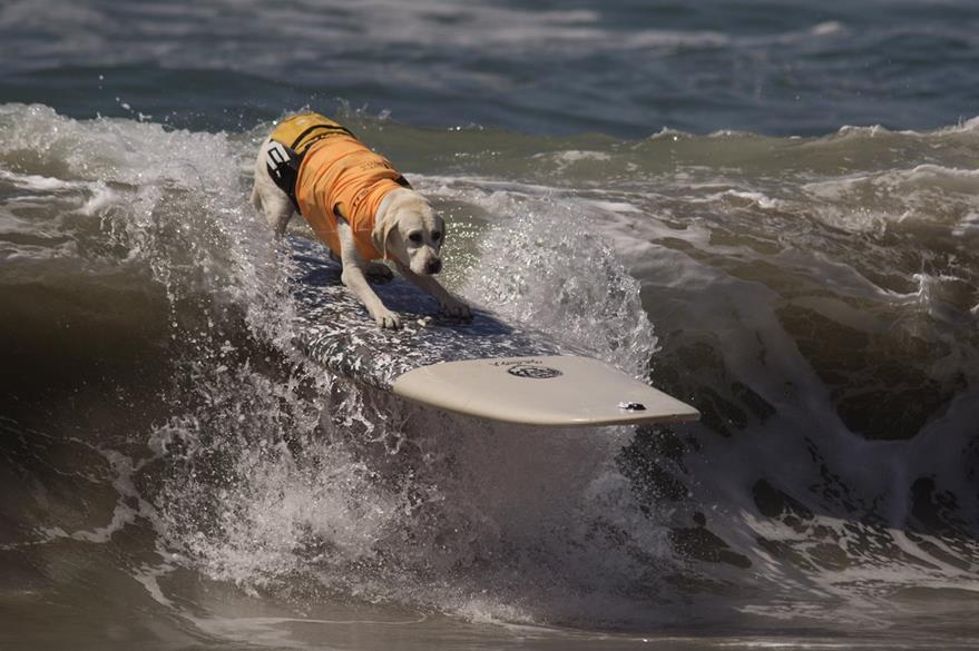 Grandes, pequeños o medianos todos se dieron cita al campeonato de surf. (Foto Prensa Libre: AFP)