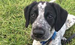 El perro antidrogas tenía 10 meses y era de raza mixta. (Foto Prensa Libre: BBC / Avsec)