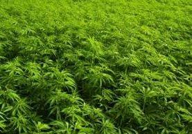 El nuevo Código de la Policía de Colombia prohíbe el consumo de marihuana en público. (Foto Hemeroteca PL).