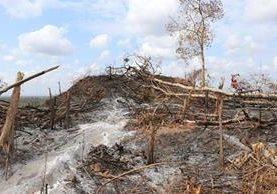 Área protegida en Petén quedó destruida por un incendio forestal. (Foto Prensa Libre: Hemeroteca PL)