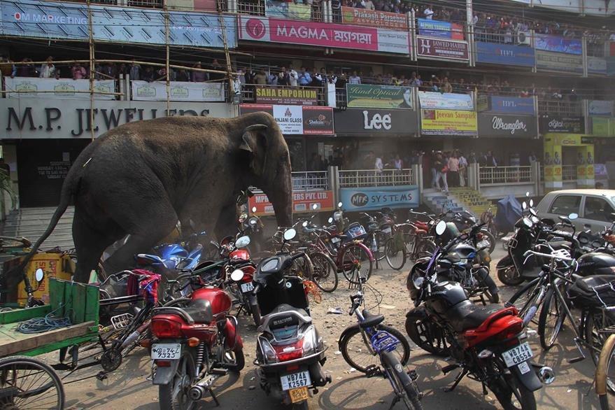 Un elefante destruyó varias motocicletas en la ciudad. (Foto Prensa Libre: AP)