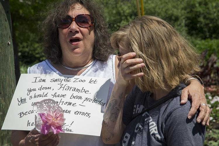 Dos mujeres lloran la muerte del gorila Harambe, sacrificado para salvar la vide de un niño que cayó en su recinto. (Foto Prensa Libre: AP).