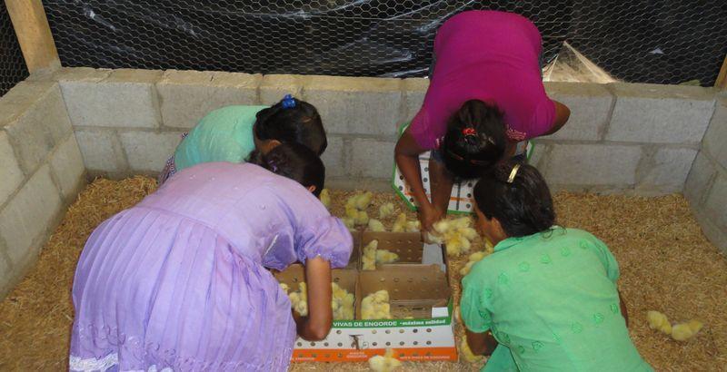 Hay crianza de pollos para su engorde y venta de carne. (Foto: Fundación Cofiño Stahl).