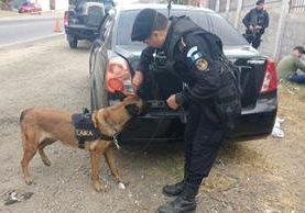La inspección del vehículo se efectua a través de un agente canino, quien alertó del posible ilícito que contenía el automotor.(Foto Prensa Libre: Víctor Gómez)