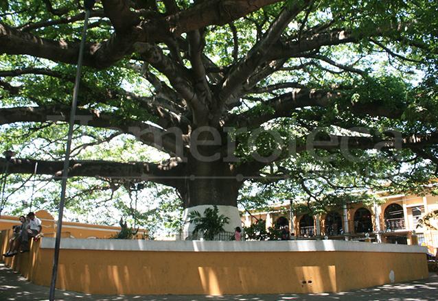 Ceiba que se encuentra en el municipio de Palín, Escuintla. (Foto: Hemeroteca PL)
