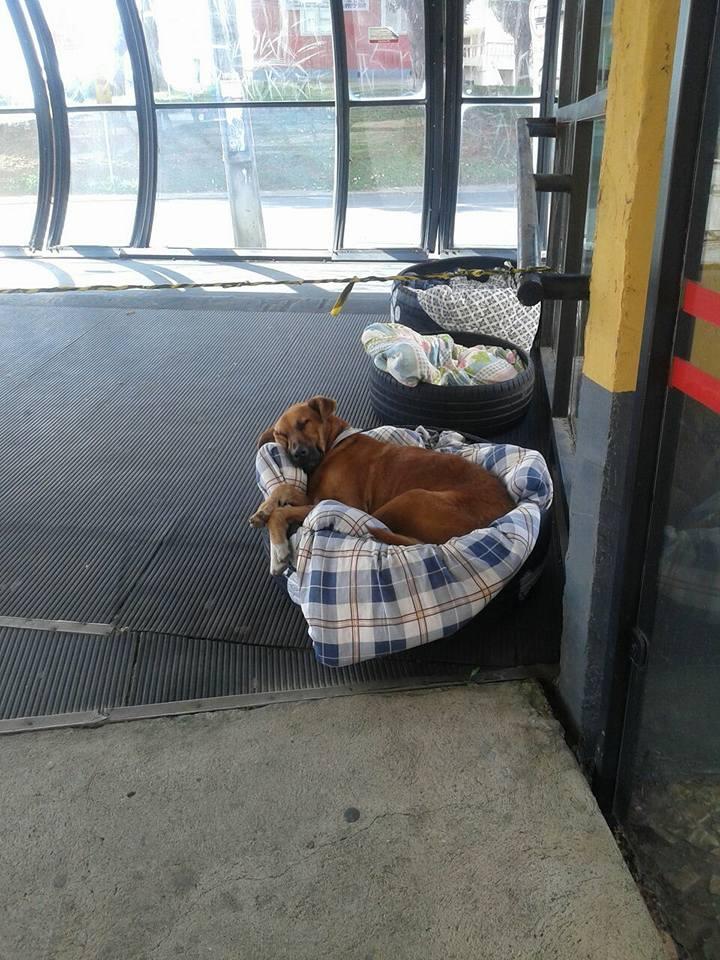 Cobijas cubren los neumáticos acondicionados para el uso de los tres perros sin hogar en una estación de autobuses en Curitiba, Brasil. (Foto Prensa Libre: Facebook Fabiane Rosa)