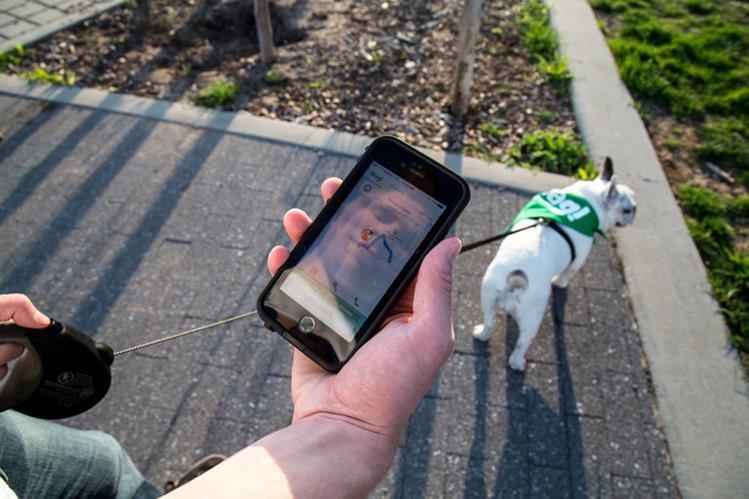 La mayoría de aplicaciones para dueños de perros son gratuitas. (Foto: Hemeroteca PL).