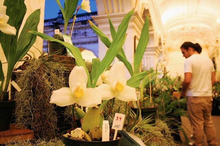 El cultivo  de orquídeas se convirtió en una fuente de n ingresos para familias de la provincia de Colombia. (Foto Prensa Libre: Hemeroteca PL)