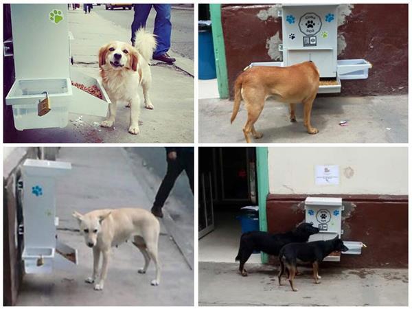 comedores gratuitos para perros callejeros de colombia