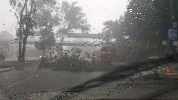 las ramas de un árbol cayeron en bulevar Liberación (Foto: Óscar Leiva).