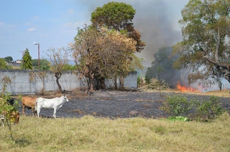Los incendios forestales afectan los bosques de la región. (Foto Prensa Libre: Mario Morales)
