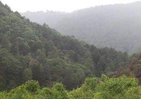 En la capital hay grandes extensiones de bosque que requieren atención para evitar la pérdida de los recursos naturales. (Foto Prensa Libre: Álvaro Interiano)