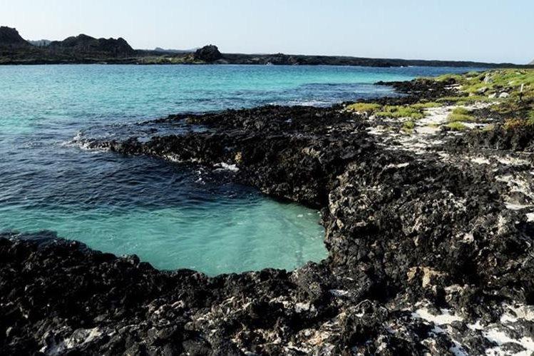 Estudio decubre que grupo bacteriano en el océano ayuda a regular el clima.