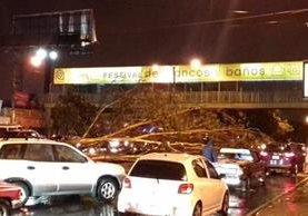 Un árbol cayó en la calzada Roosevelt y 12 avenida. (Foto Prensa Libre: @AuryMac).