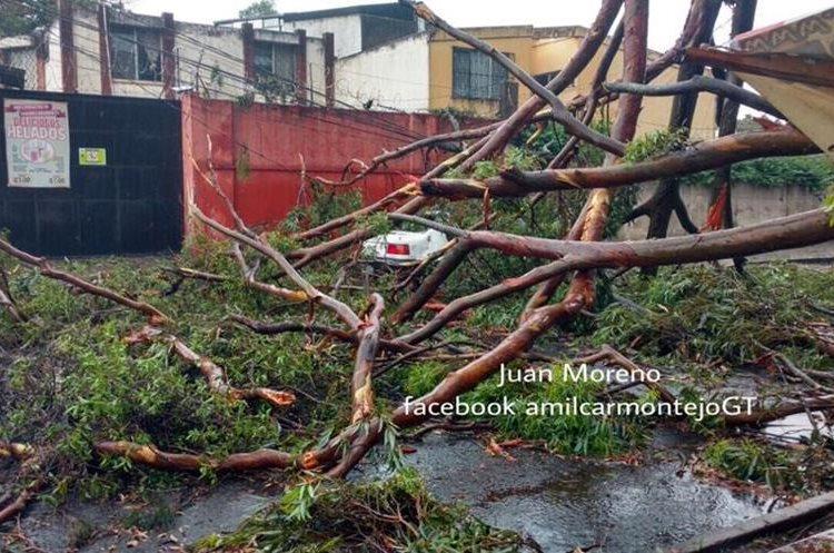 Rama de árbol que cayó sobre un carro en zona 11. Foto Prensa Libre: @amilcarmontejo.