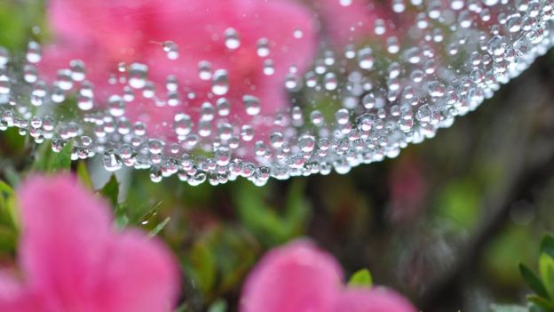 Las propiedades de la seda de araña sorprenden a los científicos. (Foto, Thinkstock)