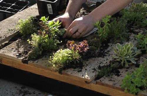 El primer huerto puede hacerlo con hortalizas pequeñas. (Foto Prensa Libre: decoracionymas.com)