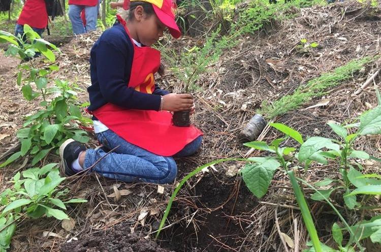 Una niña participan en la reforestación en San Miguel Petapa. (Foto Prensa Libre: Eduardo González)