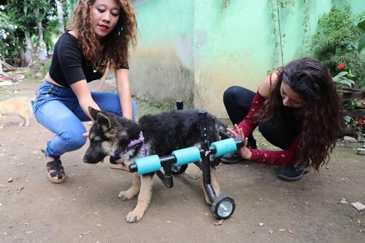 Las hermanas Figueroa Carrera atienden a uno de los perros del albergue. (Foto Prensa Libre: Rigoberto Escobar).