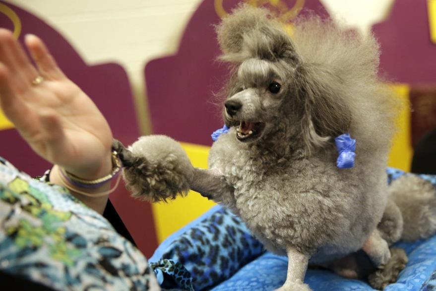 Los perros son amigos fieles. (Foto Prensa Libre: HemerotecaPL)