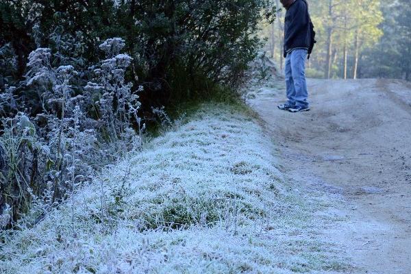 Un poblador observa la escarcha que amaneció en las plantas, en un camino vecinal.