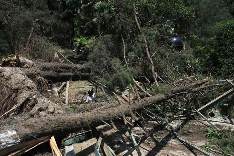 Varios árboles cayeron sobre una vivienda en la ruta a Chinautla. Los vecinos temen que ocurra una tragedia en el lugar. (Foto Prensa Libre: Esbin García)