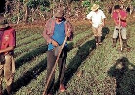 Un grupo de agricultores siembra maíz de riego en una finca de la aldea Los Sitios, Oratorio, Santa Rosa, donde trabajan unas 76 personas. (Foto Prensa Libre: Owsaldo Cardona)