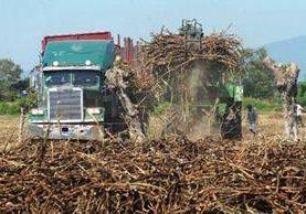 Producción de azúcar aumentará este año en El Salvador. (Foto Hemeroteca PL)