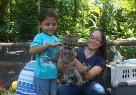 Un pequeño visitante juega con uno de los cachorros de puma en el Auto Safari Chapín, en Guanagazapa, Escuintla. (Foto Prensa Libre: Melvin Sandoval)