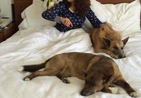 El perro de la actriz mexicana fue encontrado herido en su rancho.