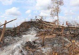 Un área devastada por los incendios en Petén. (Foto Prensa Libre: Rigoberto Escobar)