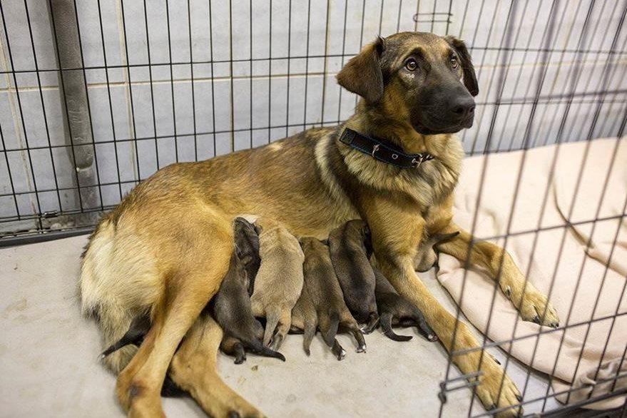 En el refugio la madre alimenta a sus cachorros. (Foto: @moscowmetro).