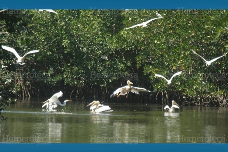 Diversas son las especies de aves que llegan al humedal Guamuchal. (Foto: Hemeroteca PL)