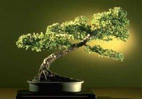 """<p>Los bonsáis necesitan cuidados especiales. <br _mce_bogus=""""1""""></p>"""
