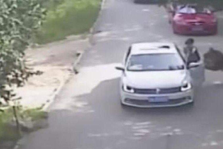 Imagen de video capta cuando el tigre ataca a una mujer en un safari en China.