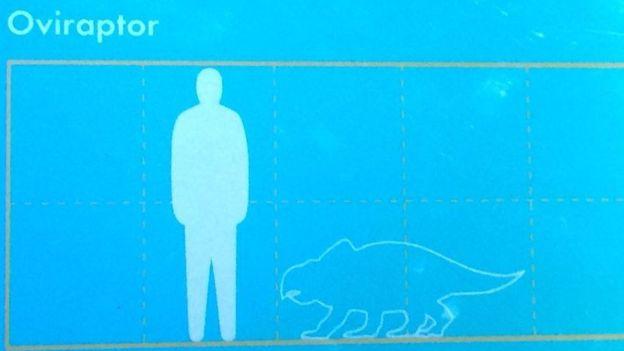 El museo puso una ilustración equivocada para identificar al oviraptor. CORTESIA DE LA FAMILIA