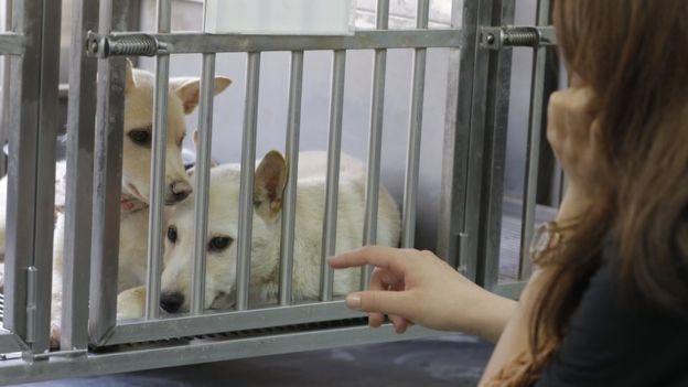 En Taiwán hay muchos perros que esperan por ser adoptados.