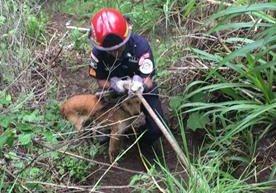 Canino cayó al barranco Las Guacamayas en Mixco