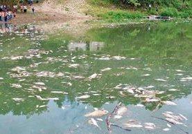 A lo largo de 105 kilómetros del río La Pasión se han encontrado cientos de peces muertos, por lo que pobladores de 16 comunidades de Sayaxché piden que se investiguen las causas. (Foto Prensa Libre: Rigoberto Escobar)