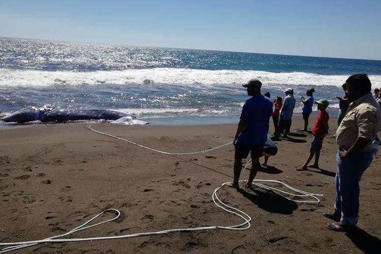 Vecinos observan la ballena localizada en Taxisco. (Foto Prensa Libre: Enrique Paredes).
