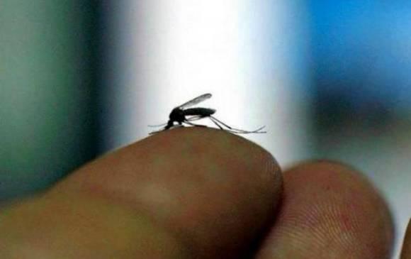 El mosquito aedes aegypti, transmisor del virus del zika. (Foto: Internet).