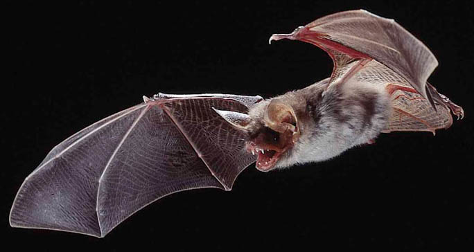 Ilustración. En EE. UU. se registran uno o dos casos de rabia en humanos cada año. (Foto: Internet).