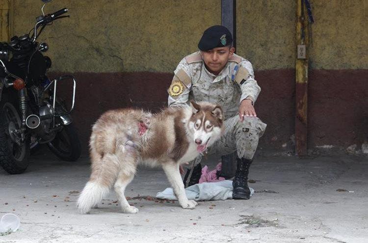 Un agente de Diprona que participó en el rescate de Locky. (Foto Prensa Libre: Unidad de Bienestar Animal del Maga).